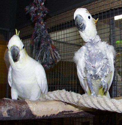 Kakadu partnervermittlung