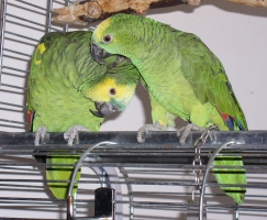 Papageien partnervermittlung berlin